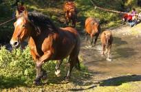 Vés a: Cal Tubau de Pardines revalida el triomf a la Fira del Bestiar de la Vall de Ribes