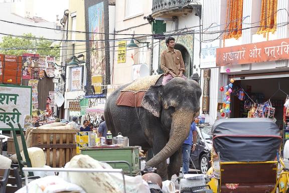 Un elefant al centre de Terrassa