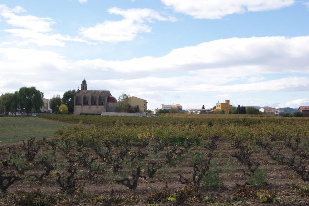 Vinyes de Vendrell Olivella a Les Cabanyes | Cupatges