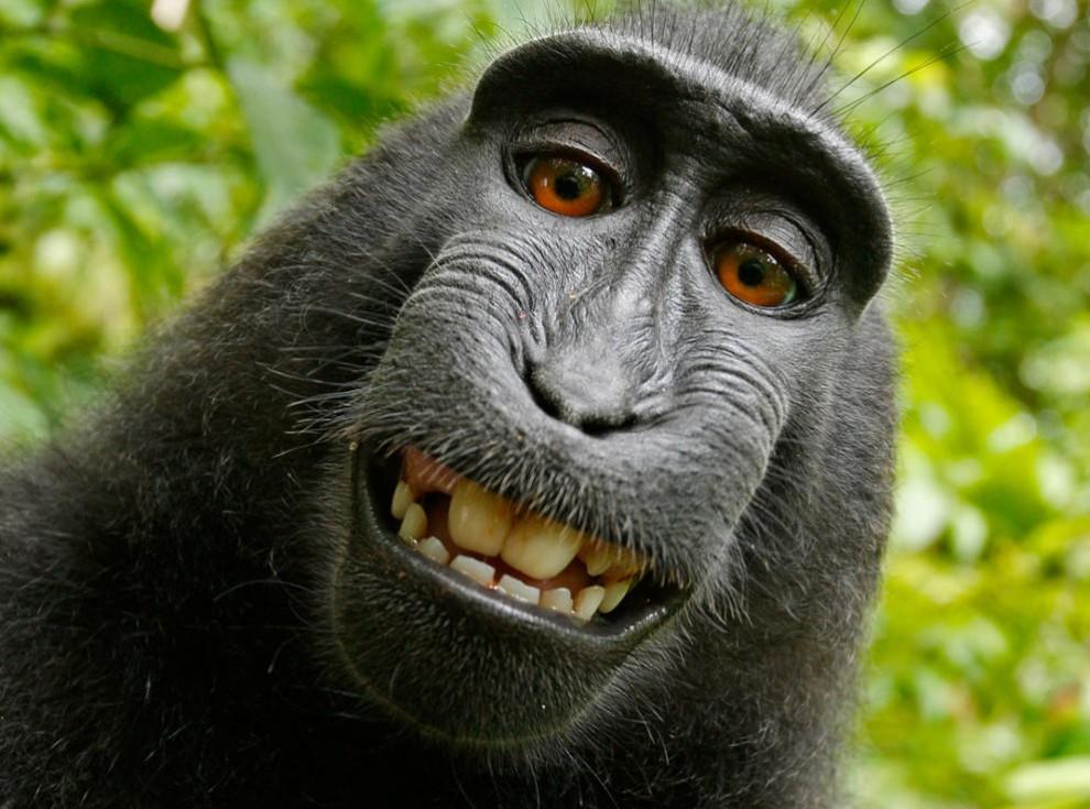 El simi somrient mirant a càmera