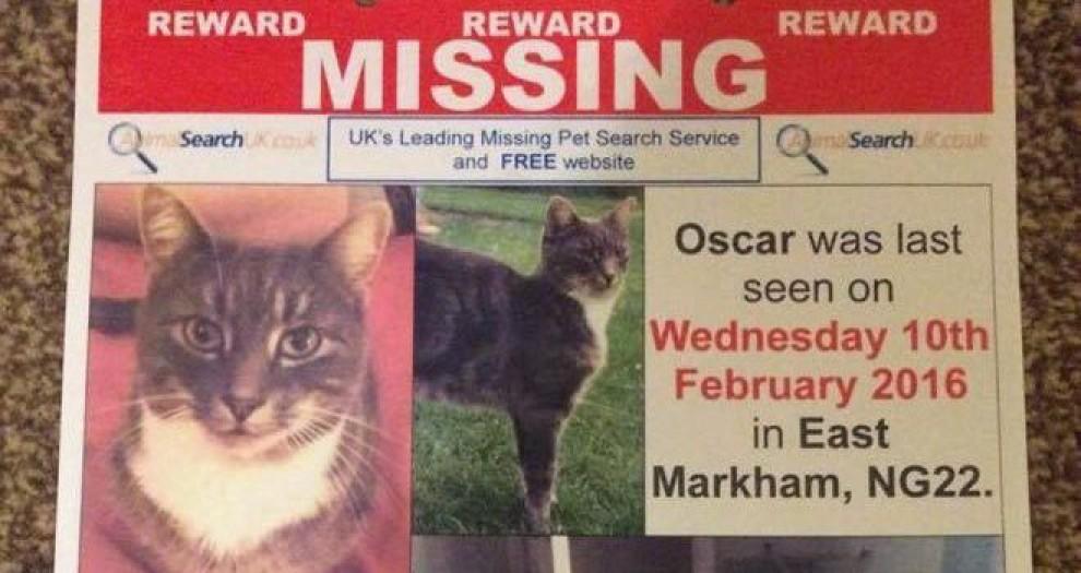 Cartell penjat a la recerca de gats perduts