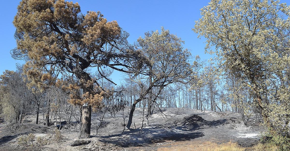 Els Bombers han donat per controlat l'incendi de Sant Feliu Sasserra aquest matí