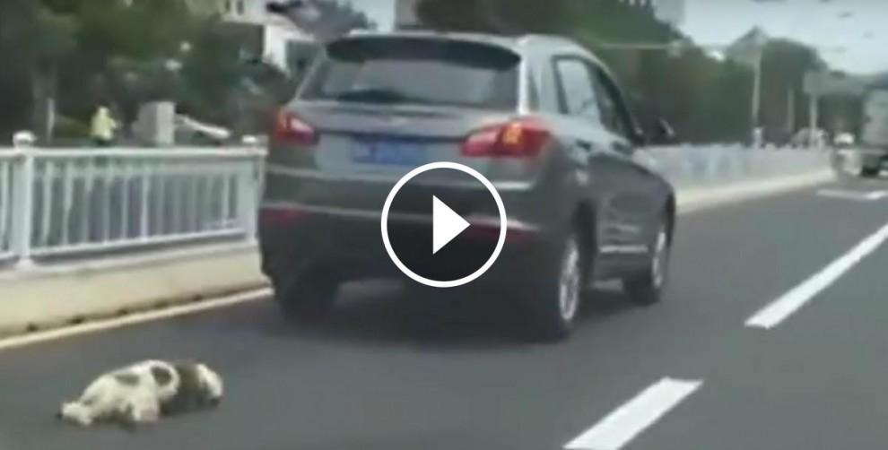 Un home arrossega fins a la mort el seu gos a la Xina