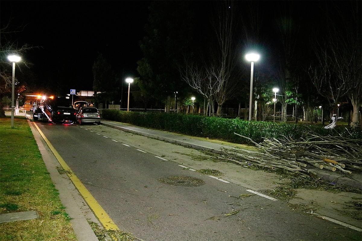 En un primer pla, l'arbre caigut a Salou que ha ferit dues persones