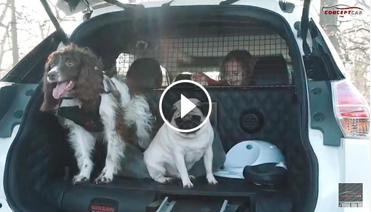 Els gossos, a dins del maleter del vehicle