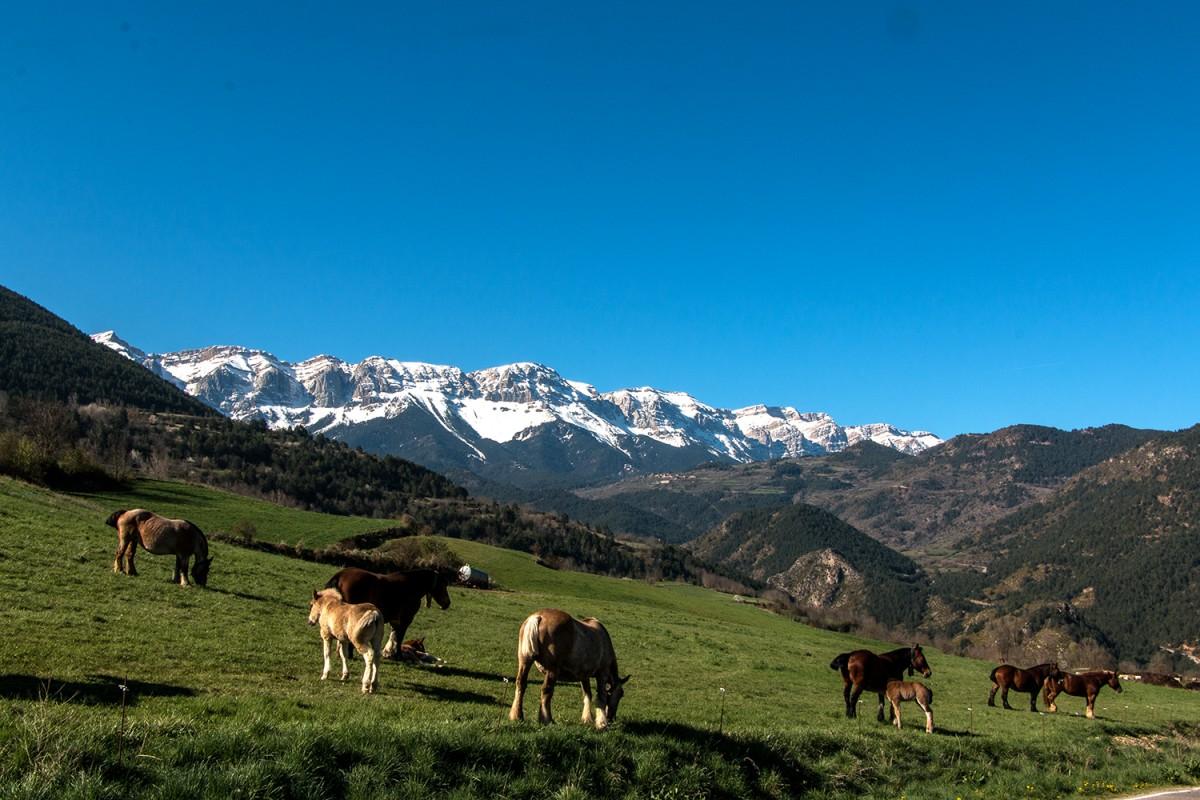 El Cadí-Moixeró participa en un projecte europeu per crear una xarxa d'espais naturals protegits al Pirineu