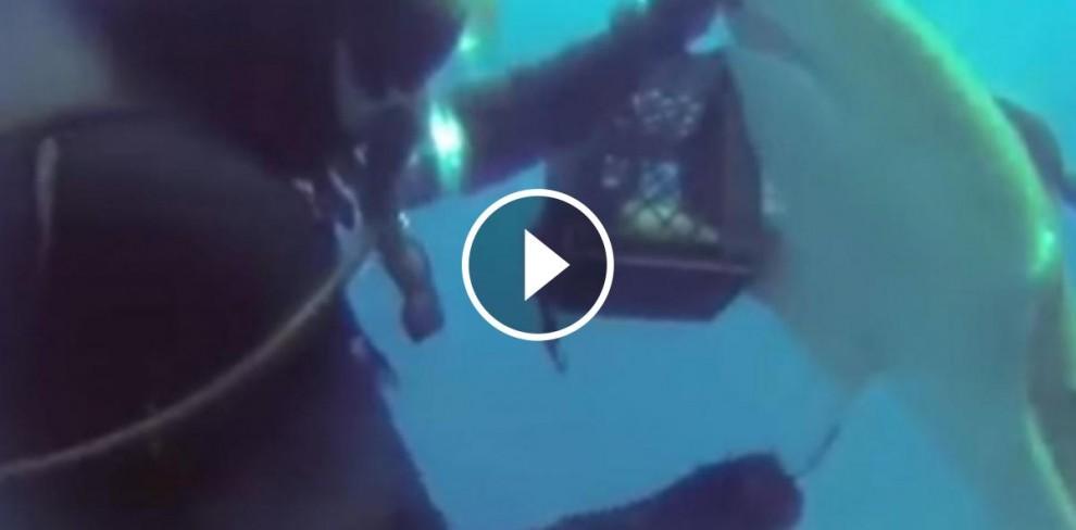 El tauró davant del submarinista