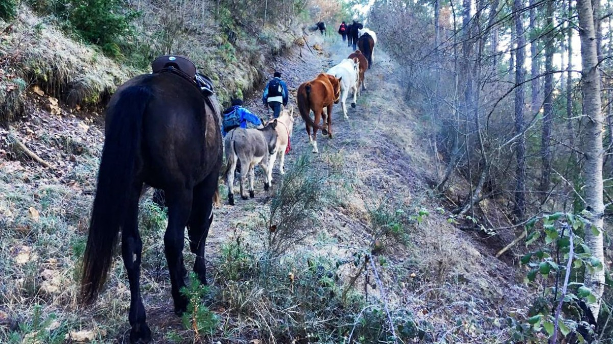 Els cavalls que es traslladaran del Pirineu al Garraf són animals recuperats de maltractaments o l'abandonament.