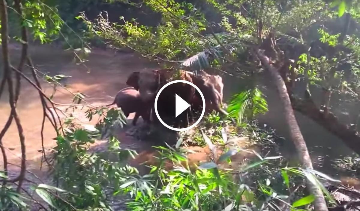 L'emotiu gest d'un elefant després del rescat d'una cria