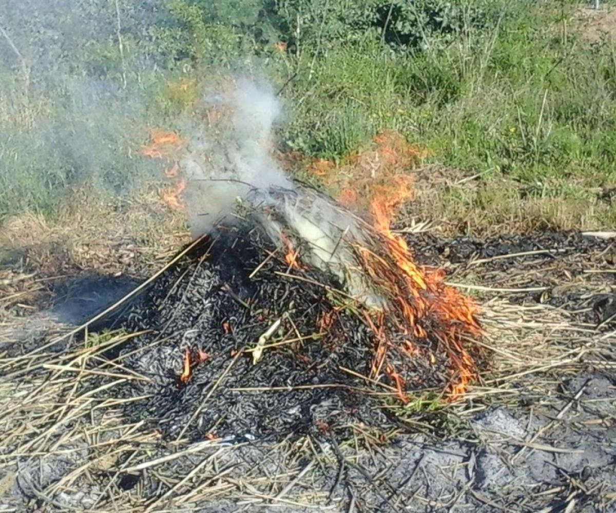 Especialment, no es poden cremar restes de poda i d'aprofitaments forestals, agrícoles o de jardineria.