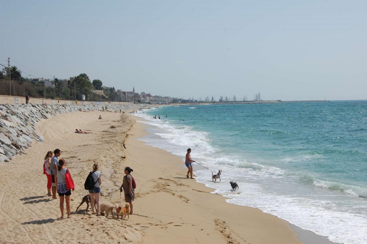 La nova platja per a gossos del Masnou