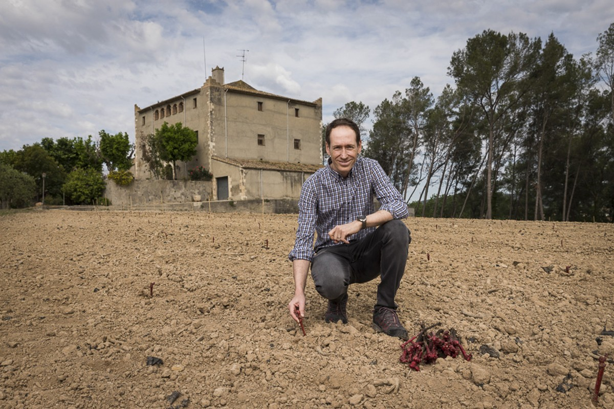 Miquel Torres davant del Castell de la Bleda durant la plantació de moneu al maig 2018