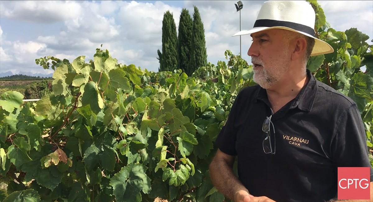 Damià Deàs, gerent de Vilarnau, ens parla de la verema d'aquest any, òptima per l'elaboració de caves de llarga criança