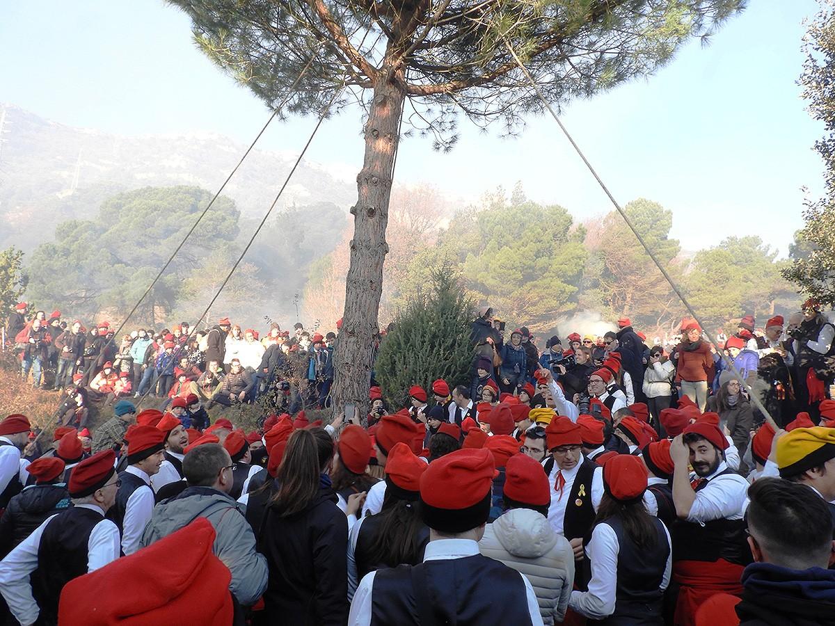 La Festa del Pi se celebra cada 30 de desembre a Centelles