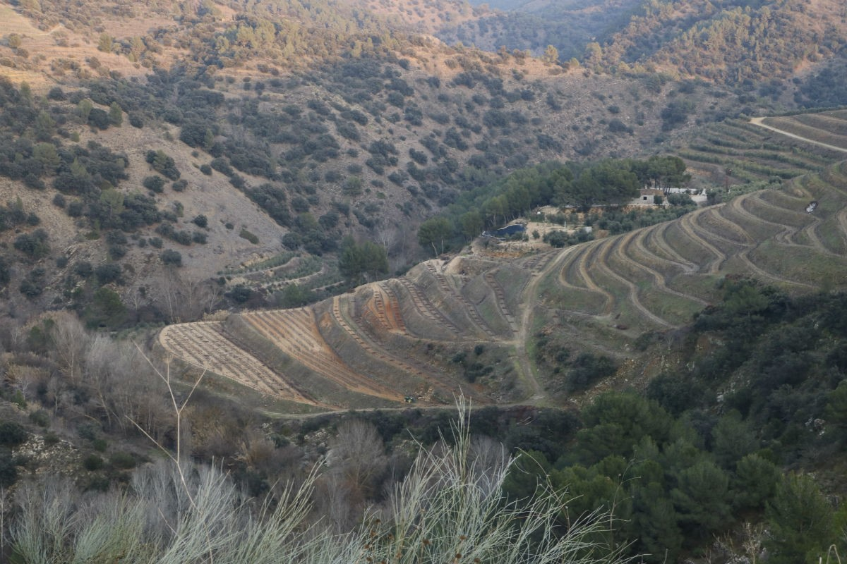 Una zona de vinyes del Priorat