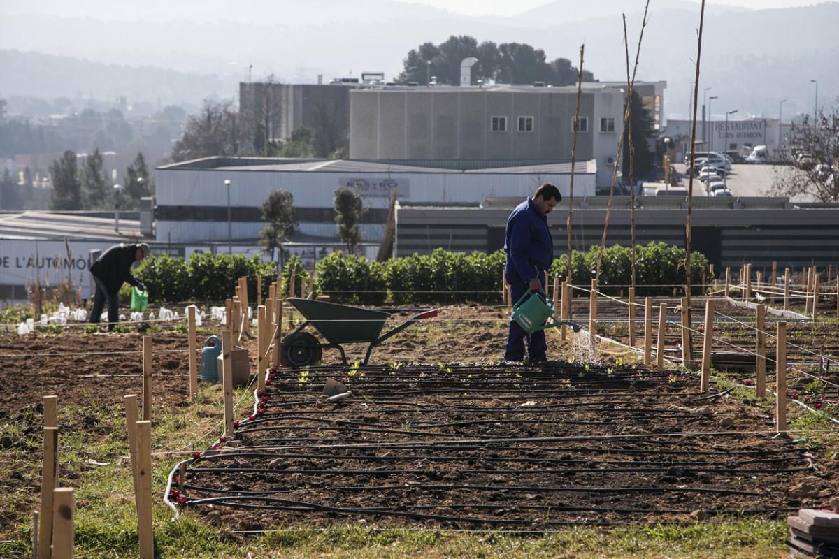 Diversos usuaris i usuàries ja cultiven els horts de Cova Solera