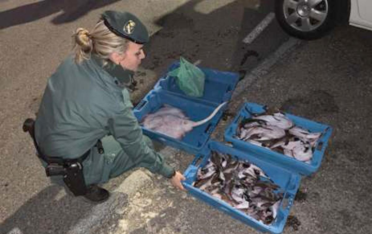 Caixes amb el peix intervingut a la Ràpita
