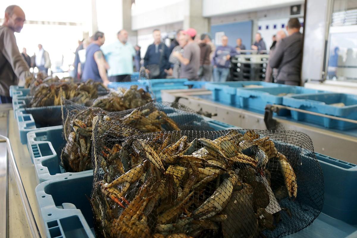 Venta de cranc blau a la llotja de la Confraria de Pescadors Verge del Carme de la Ràpita