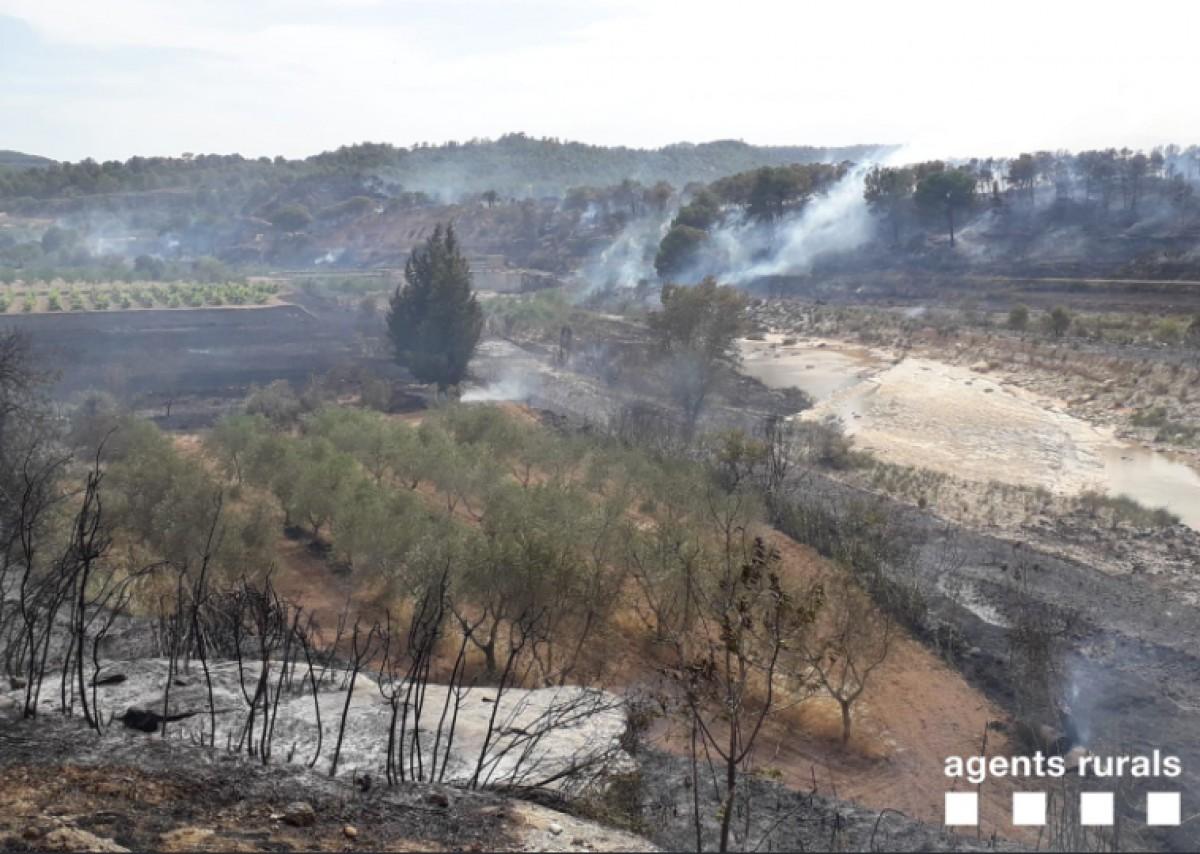 El foc ha cremat unes 14 hectàrees entre la Terra Alta i el Matarranya.