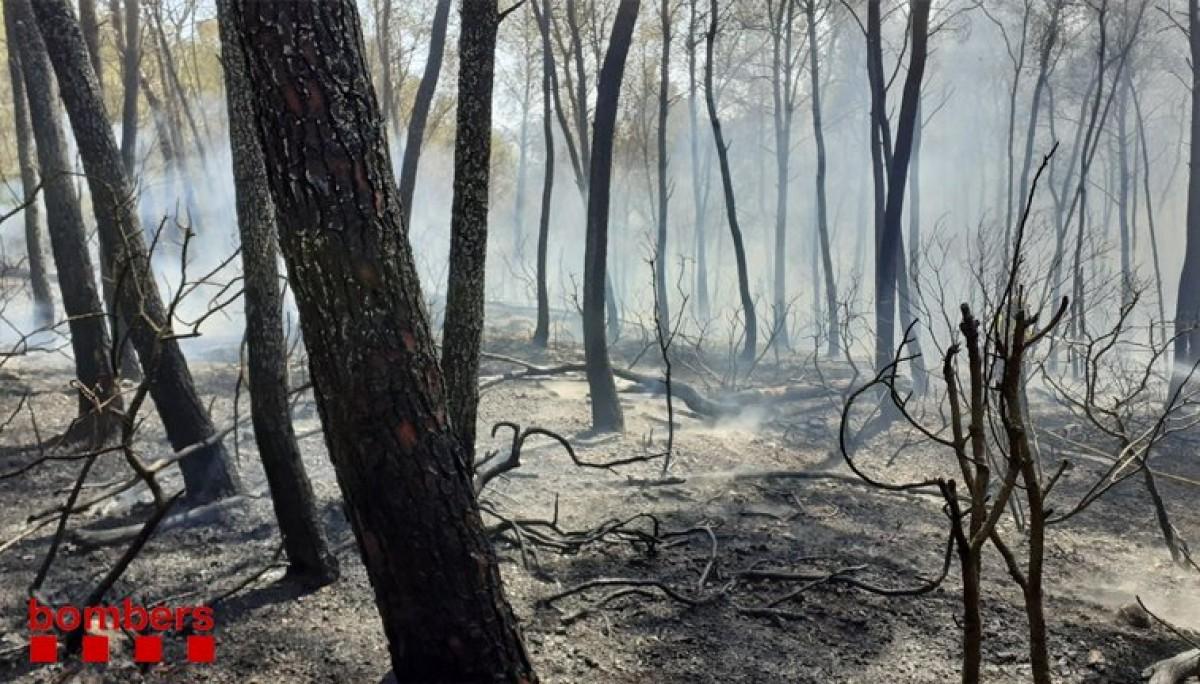 Un incendi crema a la zona del Pont del Diable