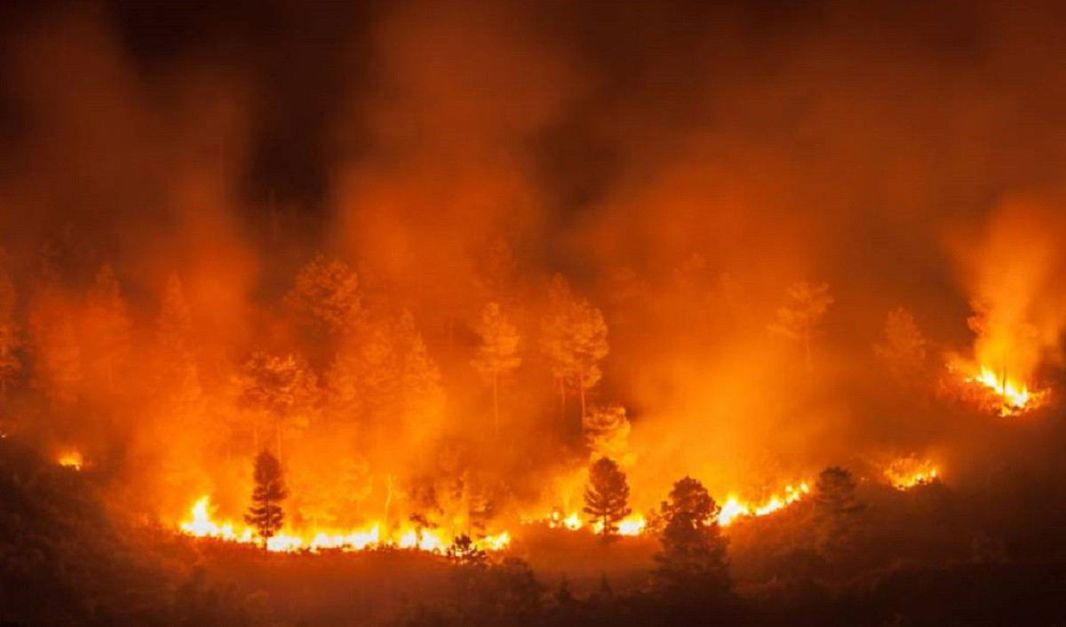 L'Amazònia, en flames.