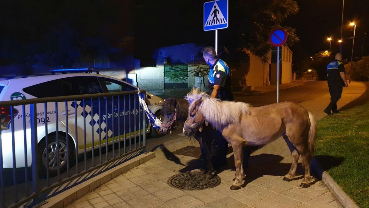 Els dos ponis localitzats a Reus són els sostrets a la Plana.