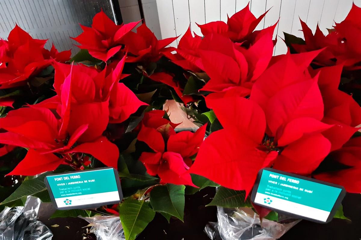 La Font del Ferro ja té a punt per vendre les plantes de Nadal