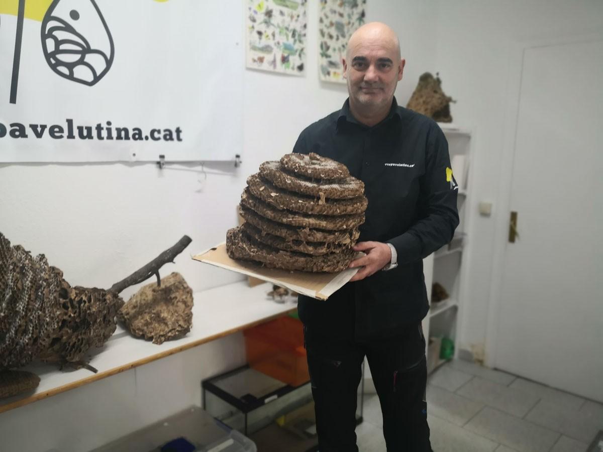 Antoni Armengol envoltat de nius ded vespa asiàtica