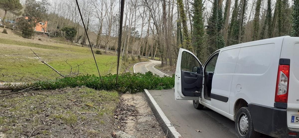 Un arbre caigut a Vallgorguina