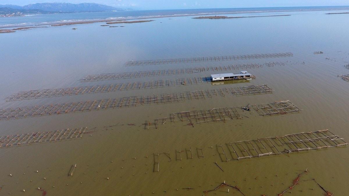 El temporal ha provocat la inundació de 3.200 hectàrees de cultius al delta de l'Ebre