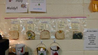 FOTOS Un experiment en una escola revela la importància de rentar-se les mans per evitar la grip