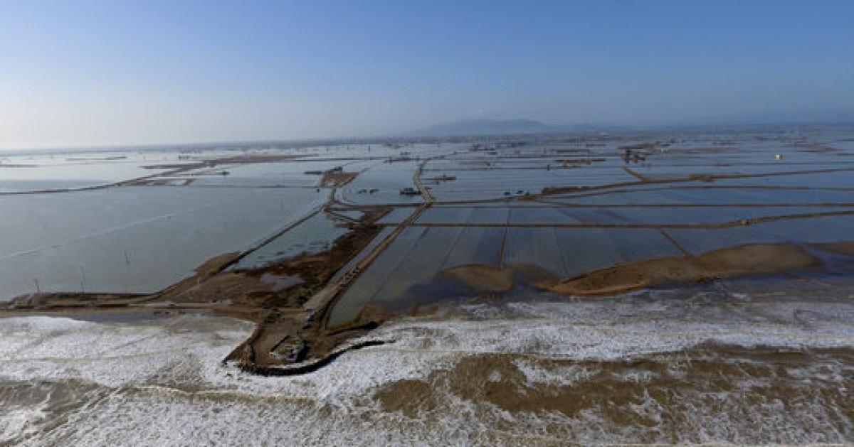 Camps d'arròs del Delta de l'Ebre afectats per les inundacions del Temporal Glòria