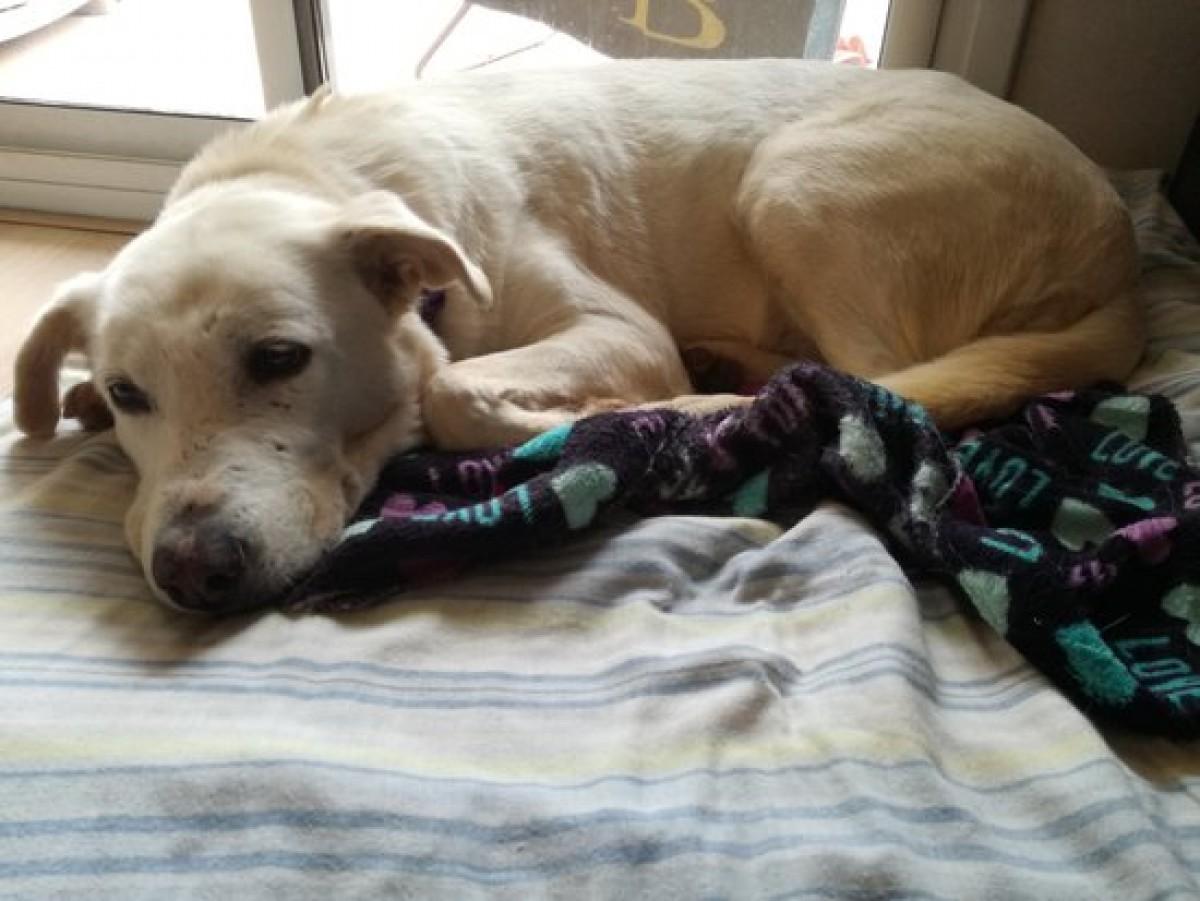 La Perla, una gossa mestissa acollida per una família