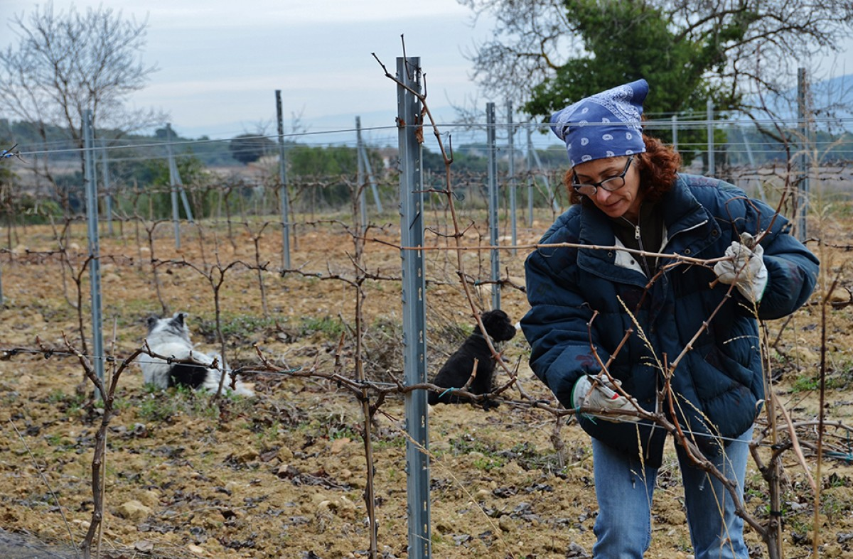 Isabel Vidal, cap sectorial de la vinya i el vi de JARC