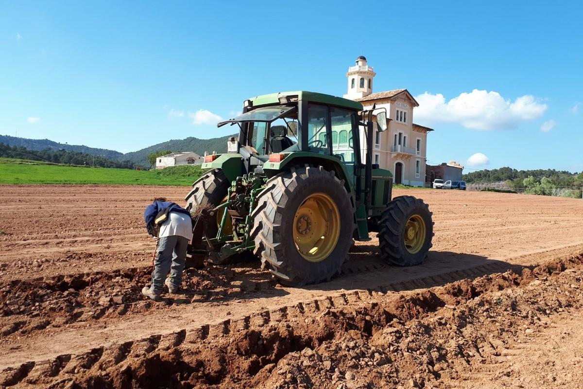 Treballs previs a la plantació de ceps vora la Torre Lluvià
