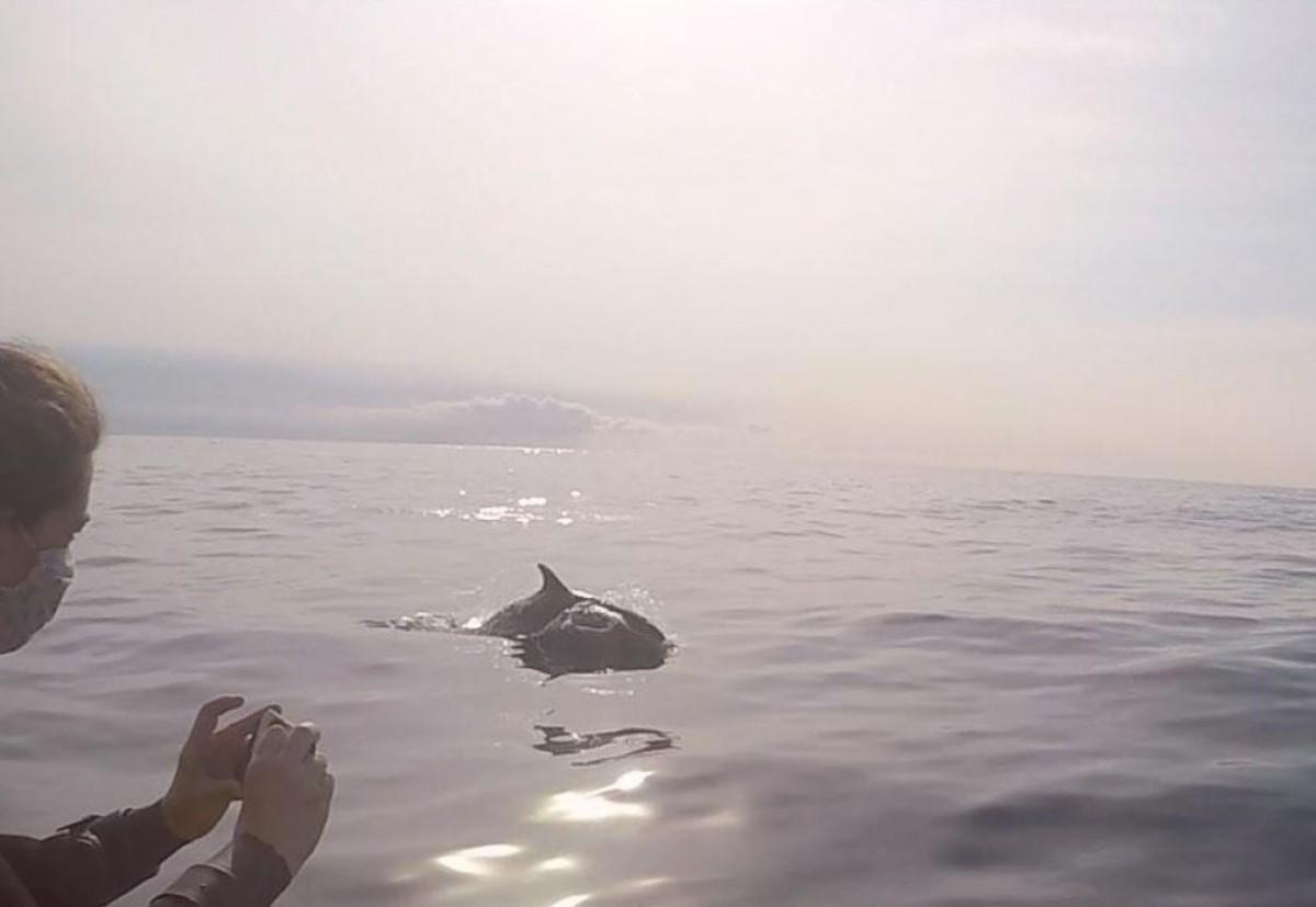 Dofins davant la costa de l'Ametlla de Mar