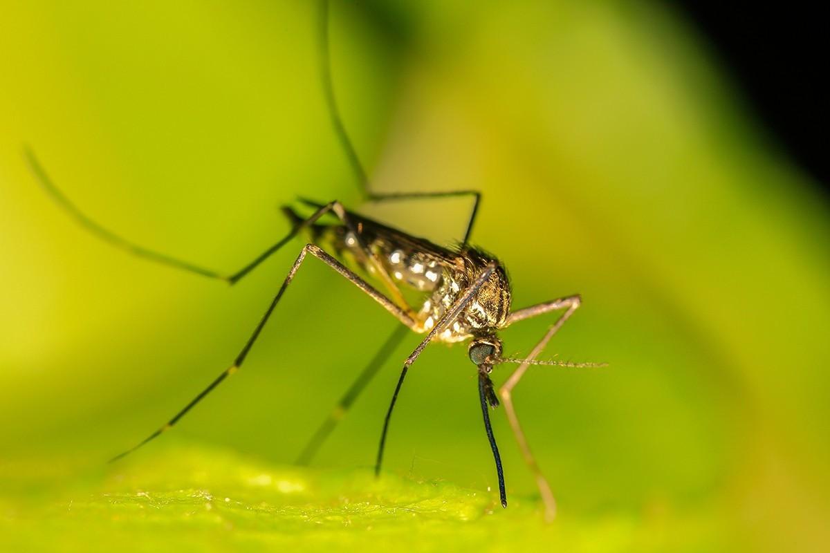 Els mosquits poden ser un problema a l'estiu