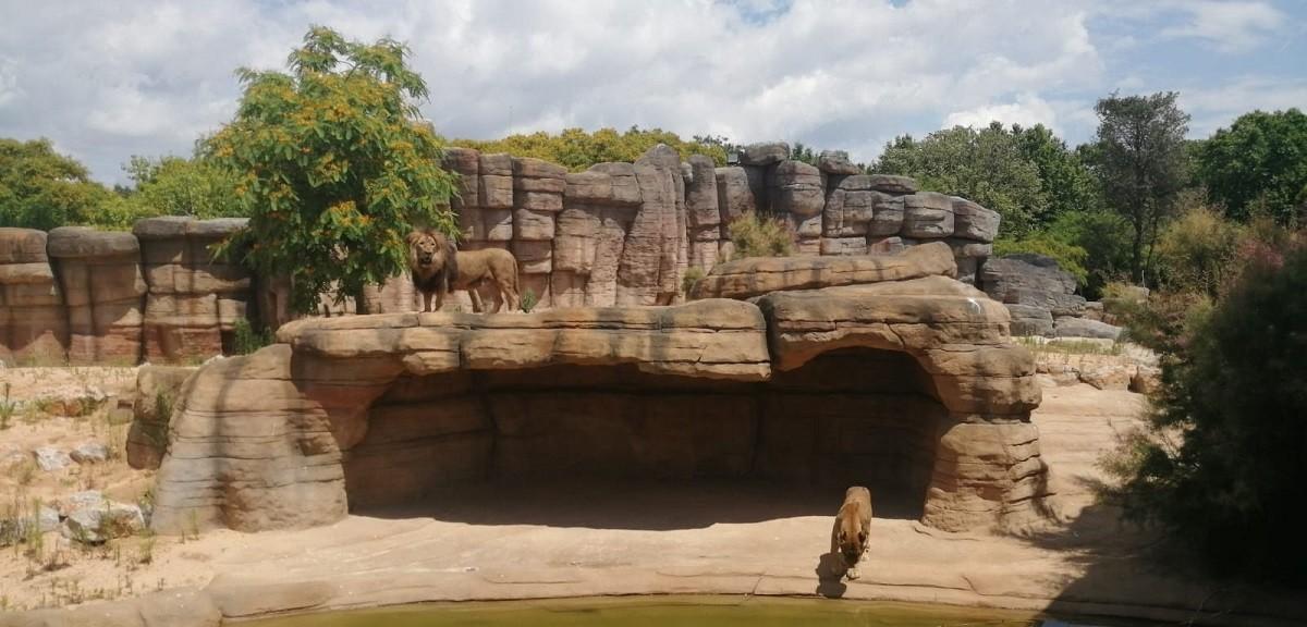 Noves instal·lacions al Zoo de Barcelona dedicades a la Sabana del Sahel.