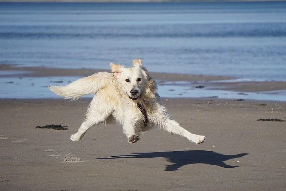 Un gos divertint-se a la platja.