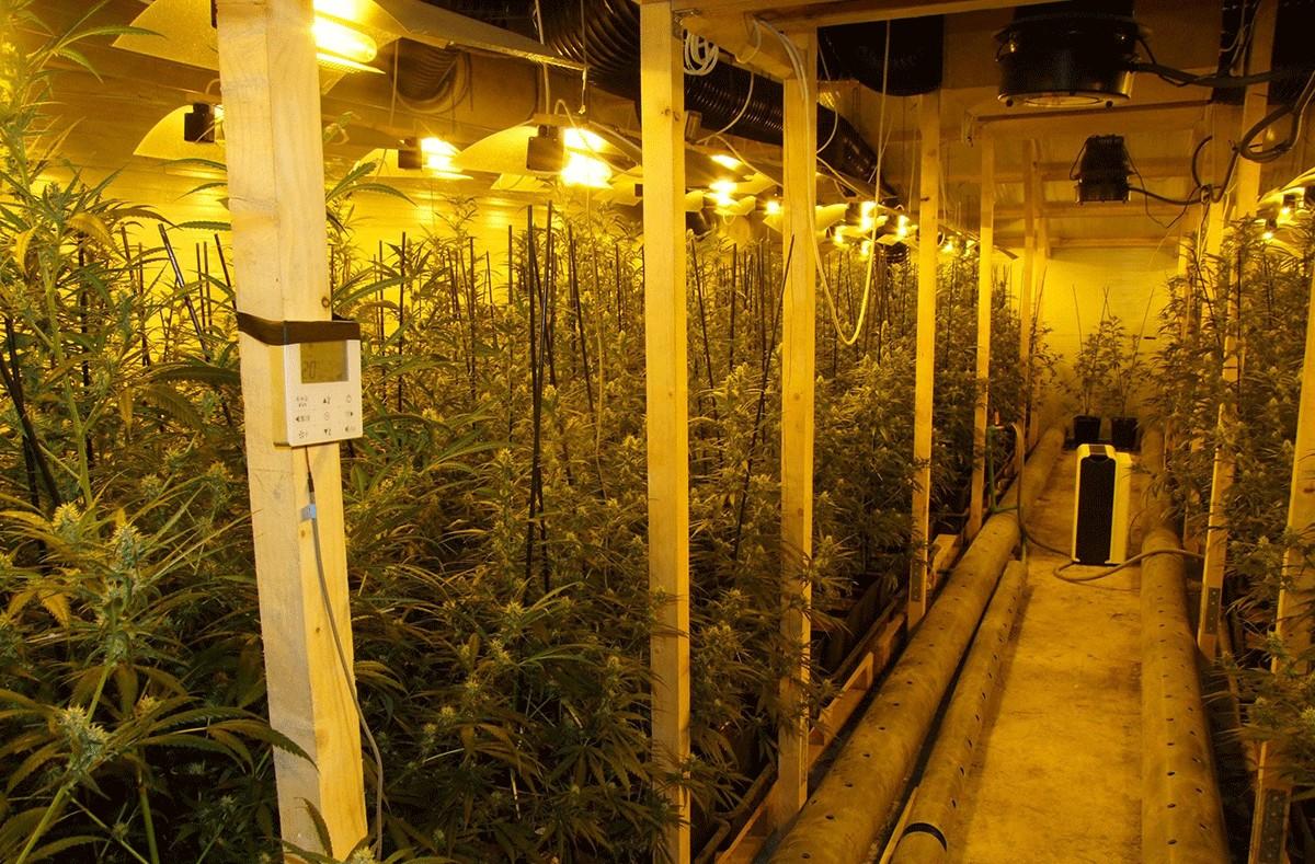 La plantació de marihuana, a Botarell (Baix Camp).