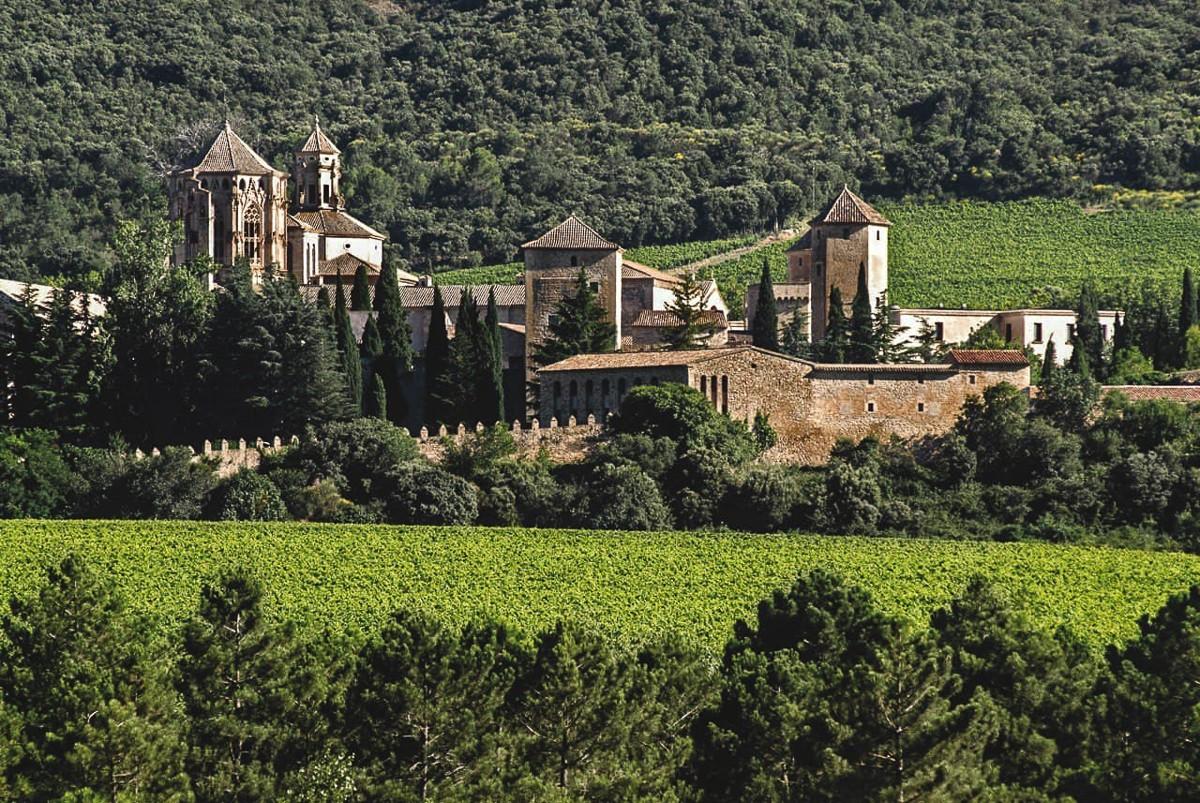 El Monestir de Poblet, envoltat de vinyes