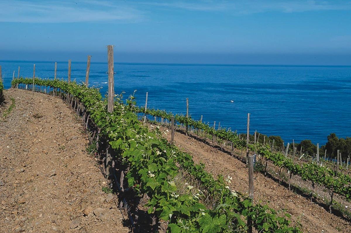 Les vinyes de la DO Empordà a tocar del Mediterrani