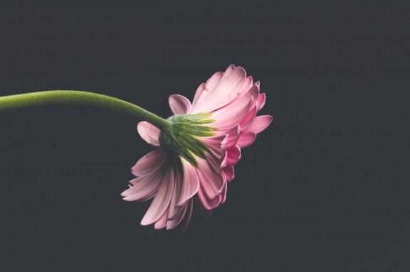 Una casa, una flor