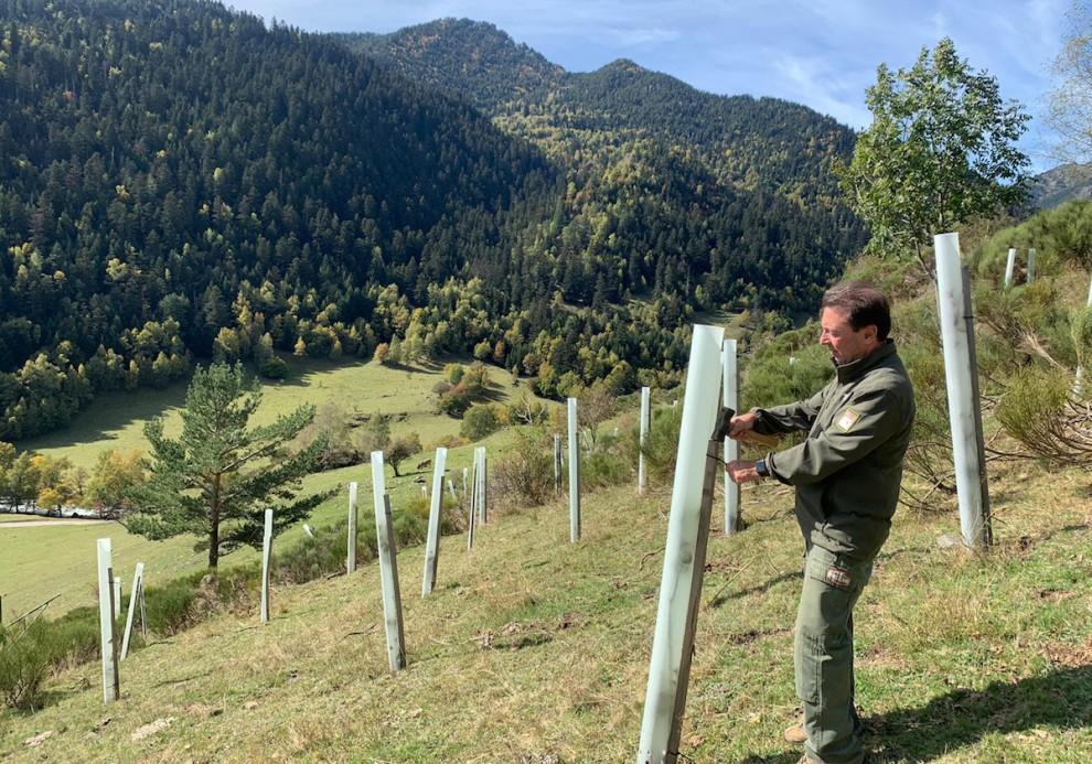 Un home a una plantació de pomeres del Pallars Sobirà