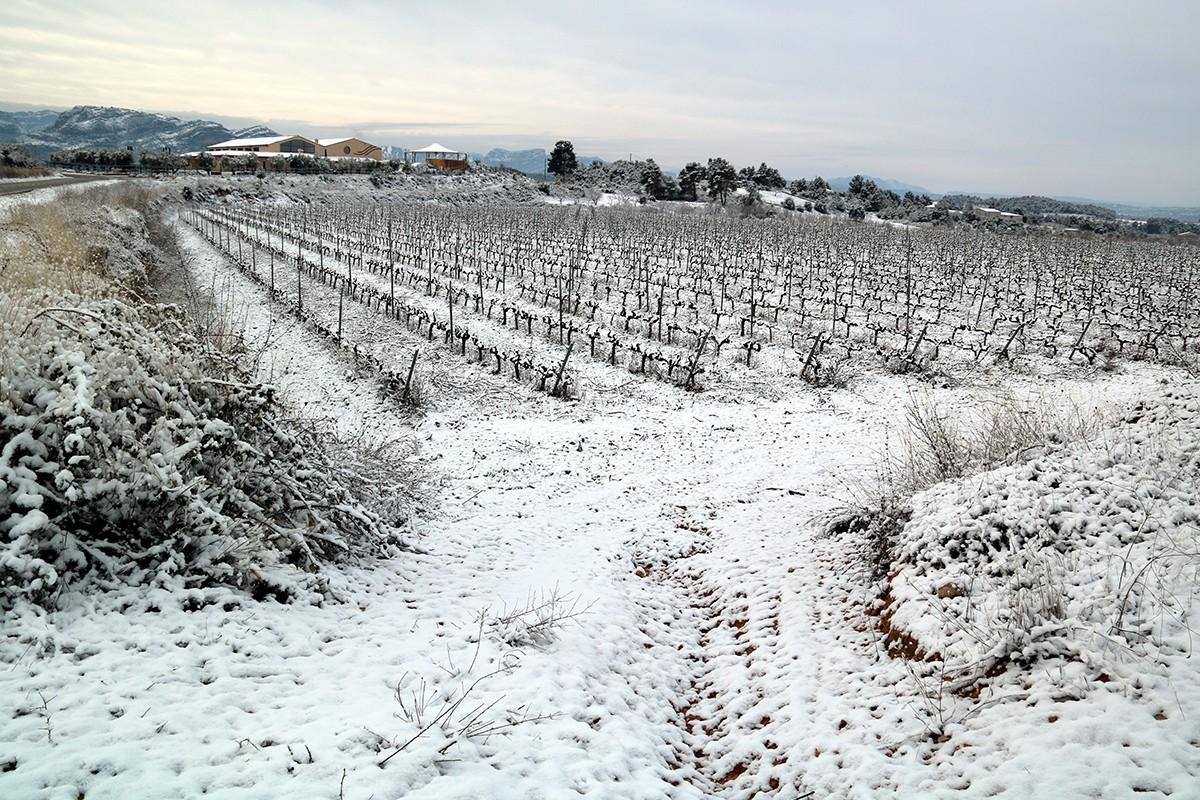 Vinyes nevades a Horta de Sant Joan.