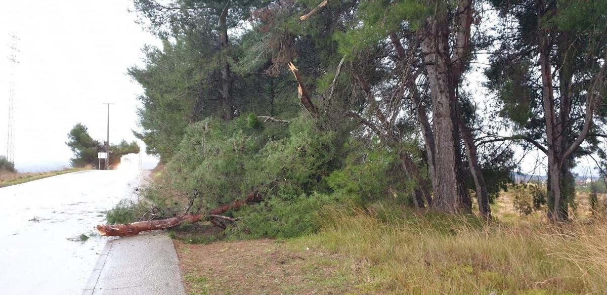 Un arbre ha caigut sobre un cotxe a Torre-Romeu
