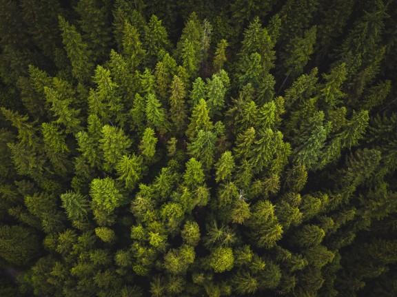 Enyorar els arbres