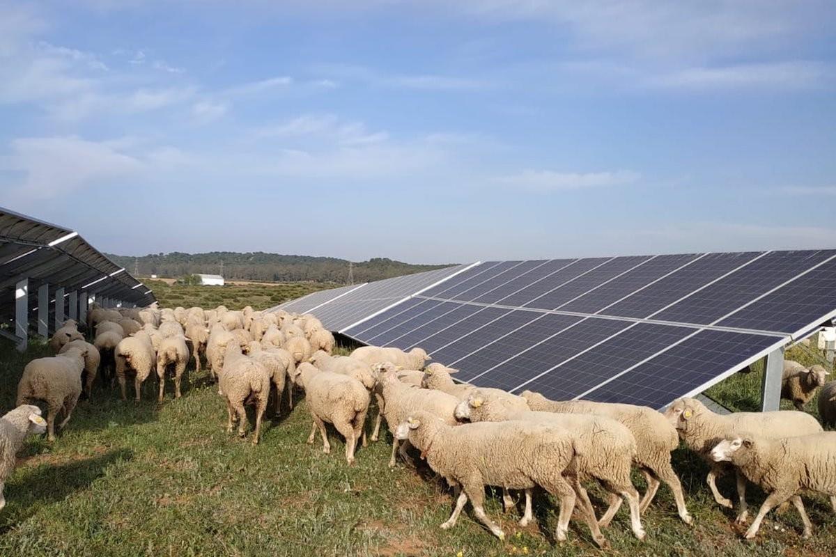 Per a Alternativa Verda cal mitigar els efectes del canvi climàtic i transformar el model productiu.