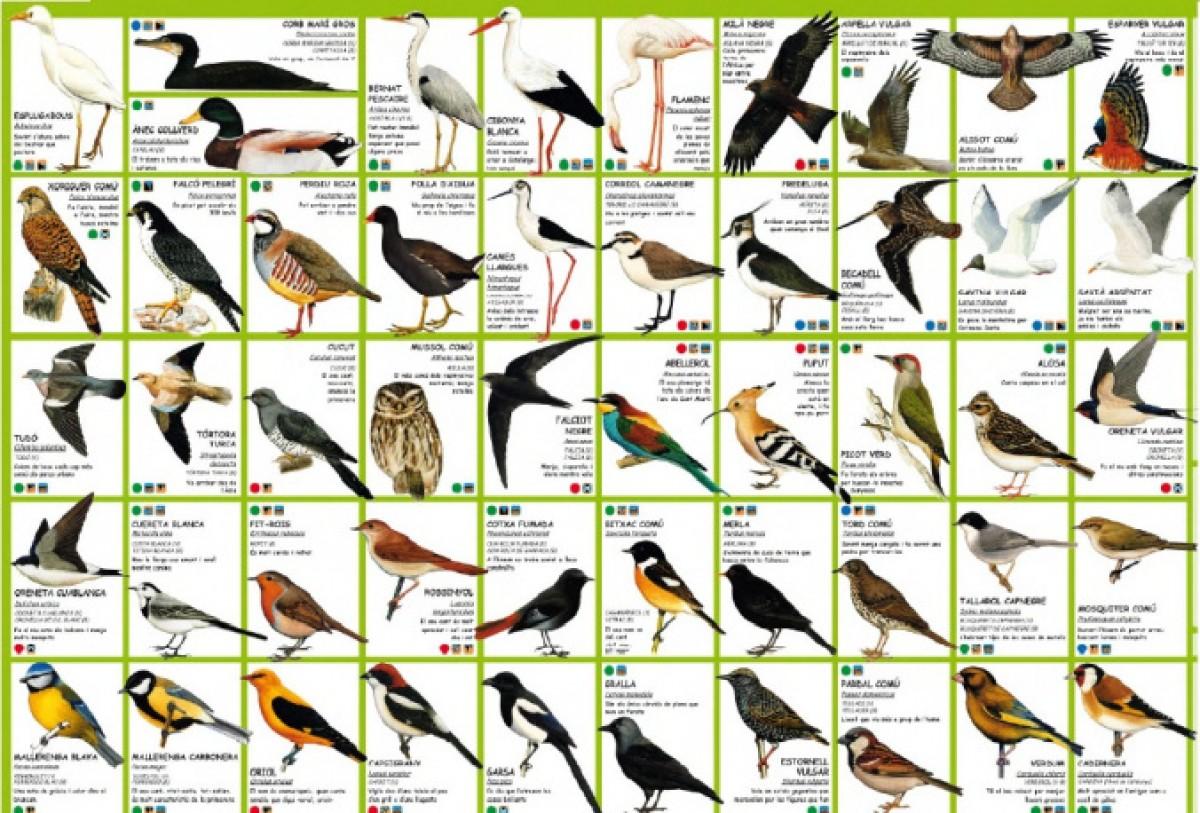 Aquest 1r seminari virtual es dedicara a alguns treballs ornitològics que es duen terme a la Garrotxa.