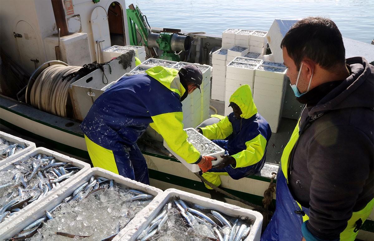 Diversos mariners descarregant al moll diverses caixes de seitó, al barri del Serrallo de Tarragona